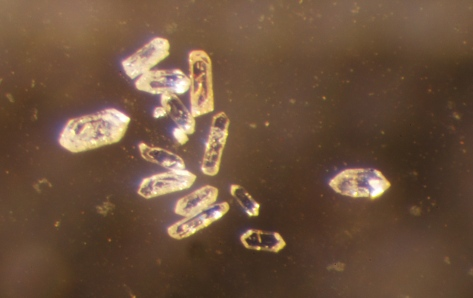 Zircon grains, without scale bar.  Image credit: Bill Mitchell