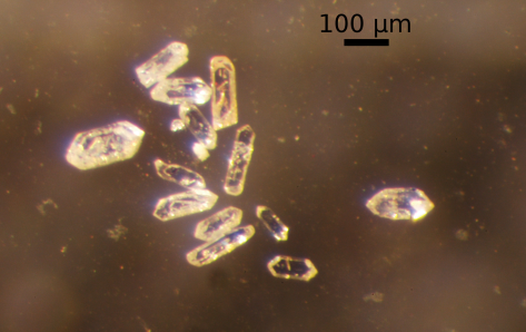 Zircon grains, with scale bar.  Image credit: Bill Mitchell