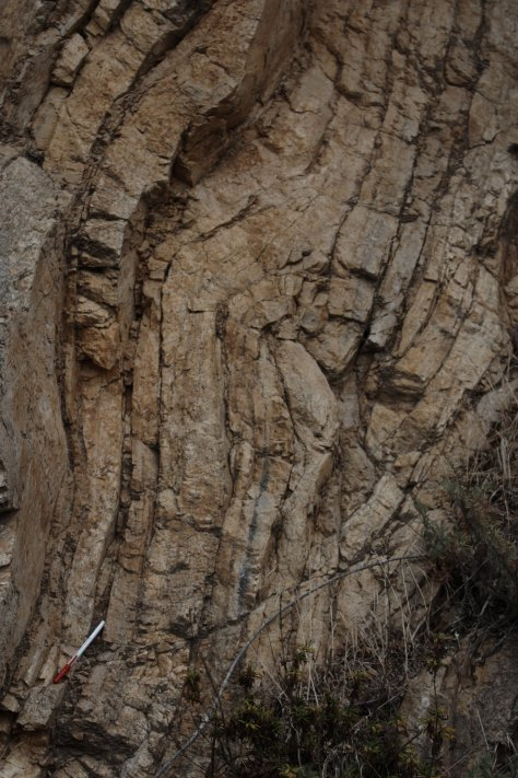 Fold in outcrop, with scale.  Image credit: Bill Mitchell