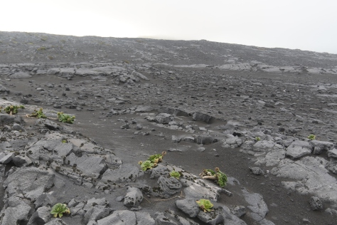 A collapsed lava tube on the Azorella Peninsula, Heard Island, gives a cross-sectional view of the roof of the lava tube.  Kerguelen cabbage plants in foreground are roughly 25 cm across.  Several pahoehoe flow tops are visible: small-scale in the foreground, and large-scale in the center toward the top of the image.  Image credit: Bill Mitchell (CC-BY).